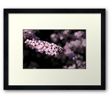 Unnamed09 Framed Print