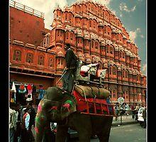 Elephant at Hawa Mahal by BaciuC