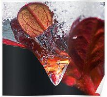 Frozen Azalia Swirl ! Poster
