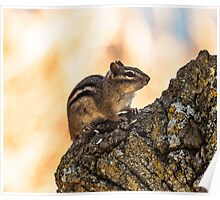 Spring Chipmunk on an oak tree Poster