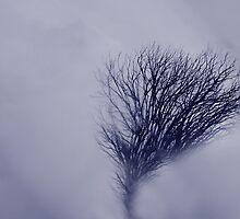 Shrouded by Varinia   - Globalphotos
