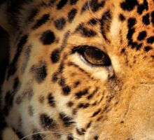 Jaguar Watching Sticker