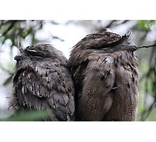 two tawnies Photographic Print