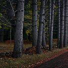 Hollybank by Peter Daalder