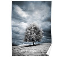 Glowing Tree Poster