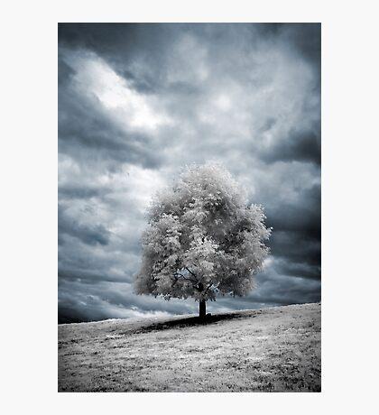Glowing Tree Photographic Print
