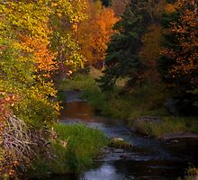 Autumn River by DarrylEPalmer