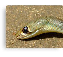 yellow Whip Snake-Macro- Canvas Print
