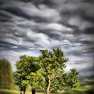 Some trees, some clouds by Kurt  Tutschek