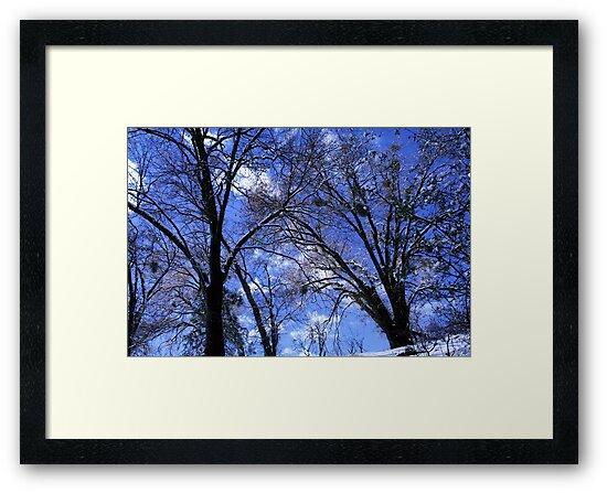 Blue Skies by royce