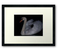 Swan in the dark Framed Print
