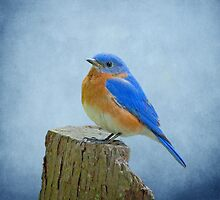 Bluebird 2 by Sandy Keeton