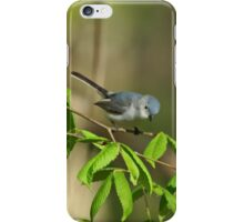 Blue-gray Gnatcatcher iPhone Case/Skin