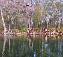 Cypress Trees by Judy Gayle Waller