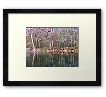 Cypress Trees Framed Print