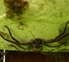 Shelob's Lair by nellie