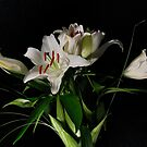 Lilies for Her by FortPhoto