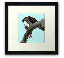 Osprey Gore Framed Print