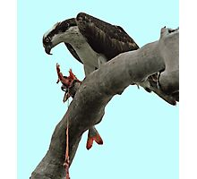 Osprey Gore Photographic Print