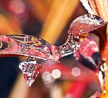 Turtle Icicle ! by robkal