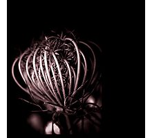 ribs ... Photographic Print