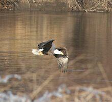 Fly like an Eagel by Rick  McFarland