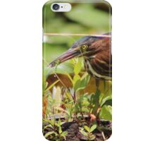 Little Green Heron with Dragonfly iPhone Case/Skin