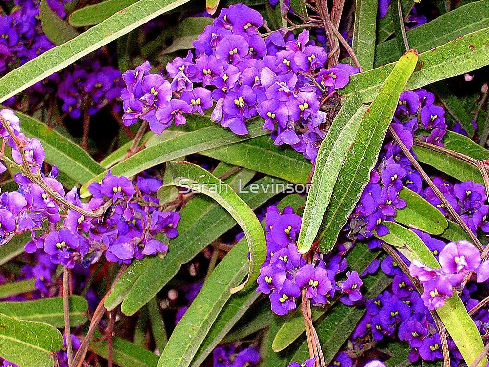 Intense purple clusters by Sarah  Levinson