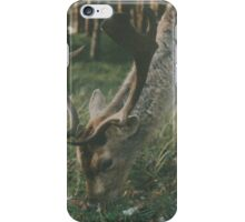 Deer in the woods searching for food iPhone Case/Skin