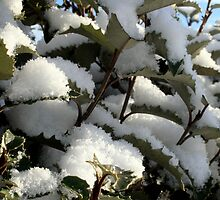 Snowy leaves by Roxy J