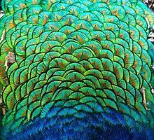 Peacock by eddytkirk