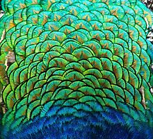 Peacock by eddytkirk