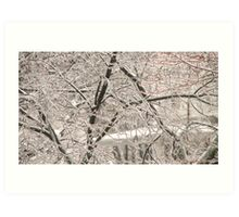 Ice in the trees Art Print