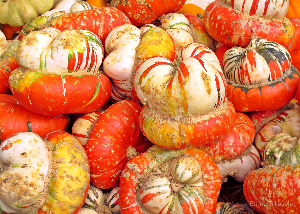 Turban Squash  by Ethna Gillespie
