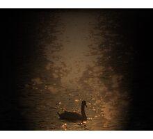 The Orange Swan Photographic Print