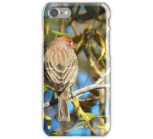 House Fench iPhone Case/Skin