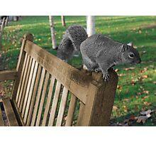 The squirrel Photographic Print