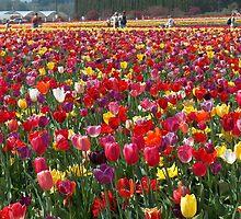 Tulipa 2 by Fred Seghetti