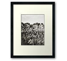 Saxony Framed Print
