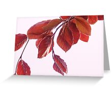 red beech Greeting Card