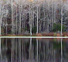 Fall in South Carolina by paula whatley