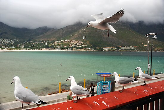 Incoming...Cape Town Central. by Sharon Bishop