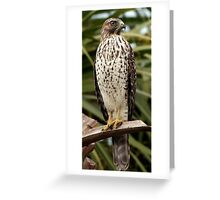 Hawk on Frond Greeting Card