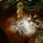 Christmas Kitty by LauraElizabeth