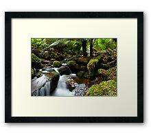 Rainforest Creek Framed Print