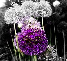 Allium  by colette2511