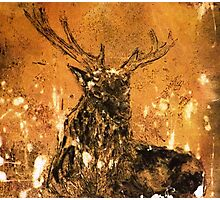 Golden Hind - stag Photographic Print