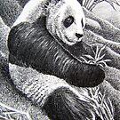 ACEO Panda I by John Houle