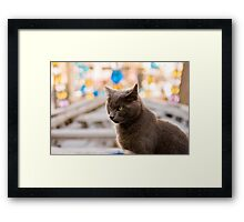 The cat who likes museums Framed Print