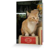 Cat model MT-12 h Greeting Card